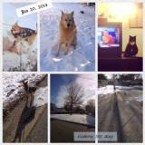 Week of Jan 20,2014